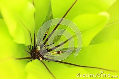 Closeup of bird s nest fern in a market