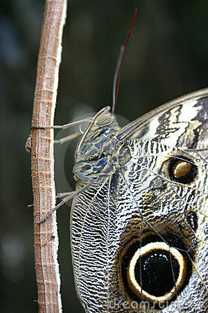 Closeup of a butterfly