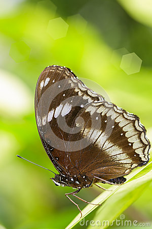 Closeup butterfly on green leaf