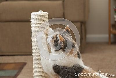 Closeup of cat using scratching post
