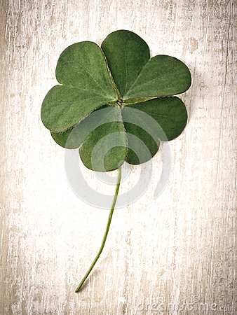 Free Closeup Clover Leaf . Royalty Free Stock Photo - 54332515