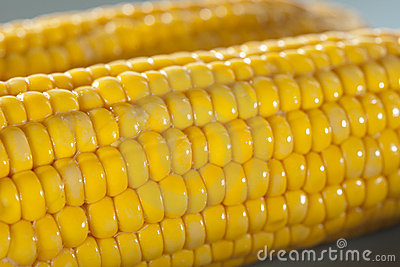 Closeup of corn