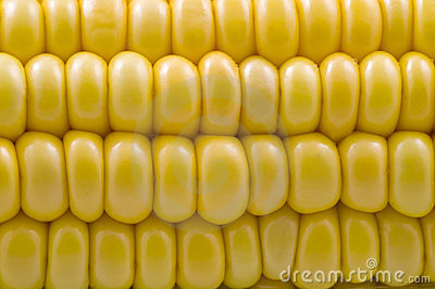 Closeup of corn cob
