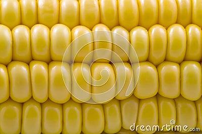 Closeup of corn cob