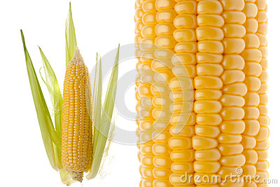 Closeup of the corncob