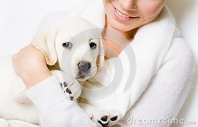 Closeup of cute puppy on the hands of woman