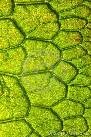 Closeup detail of leaf