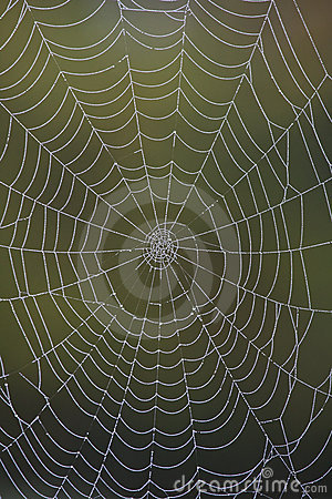 Closeup of a dew-covered spider web