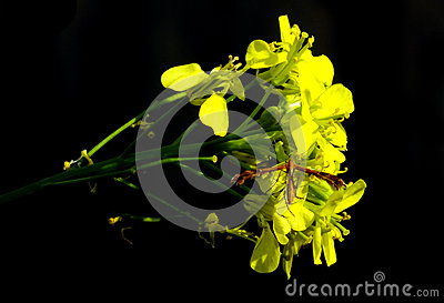 Closeup of a dragonfly on yellow flower