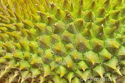 Closeup of durian texture
