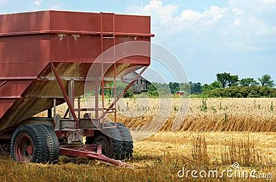 Closeup farm trailer in wheat field