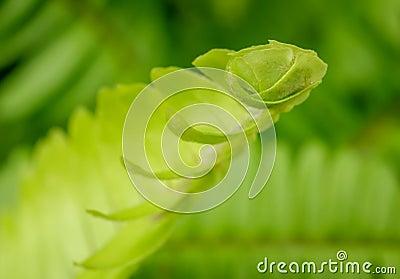 Closeup of fern.