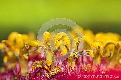 Closeup of flower stamens.