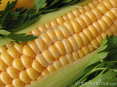 Closeup of fresh corn