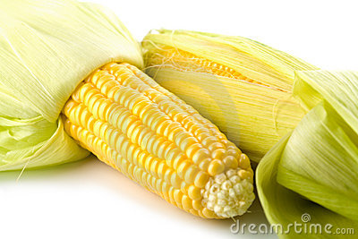 Closeup of fresh maize corns isolated