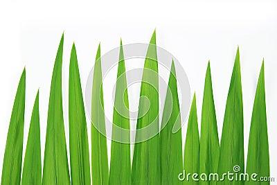 Closeup grass