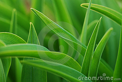 Closeup on grass leaves