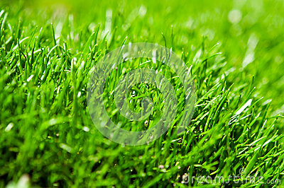Closeup of green grass
