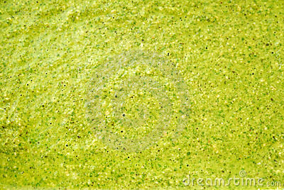 Closeup of green tea texture