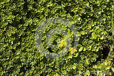 Closeup Green
