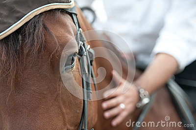 Closeup of a horse head with detail on the eye and on rider hand. harnessed horse being lead - close up details.  a stallion horse