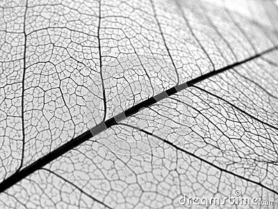 Closeup leaf veins texture