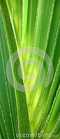 Closeup of Lit Palm Fron