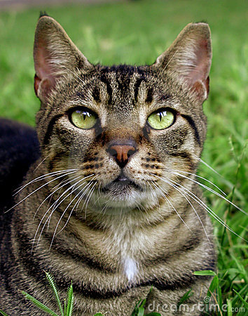 Free Closeup Of A Cat Stock Photo - 279140