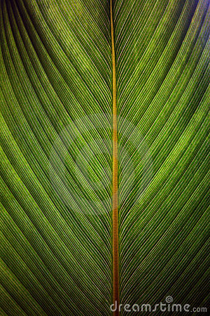 Free Closeup Of A Leaf Royalty Free Stock Photography - 3668767