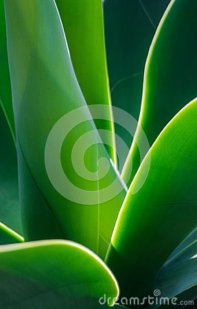 Free Closeup Of Evening Sun Lighting Edges Of Green Leaves Stock Images - 115068494