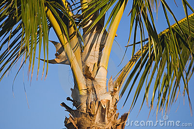 Closeup of Palm Tree