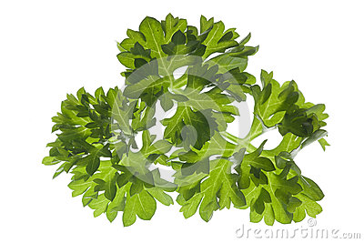 Closeup of parsley