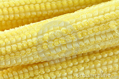 Closeup photo of baby corn (Candle corn)