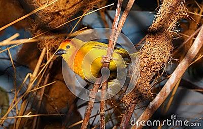 Closeup Photography Of Yellow Bird Perched Free Public Domain Cc0 Image
