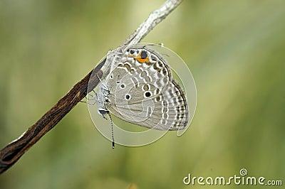 Closeup photos of butterfly