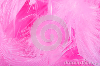 Closeup of pink boa feathers