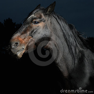 Closeup portrait black horse in the dark