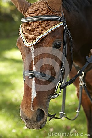 Closeup portrait of brown horse