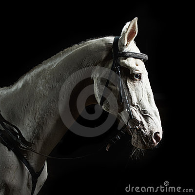 Closeup portrait white horse in the dark