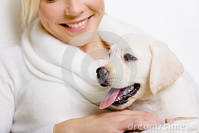 Closeup of puppy of labrador on the hands of woman