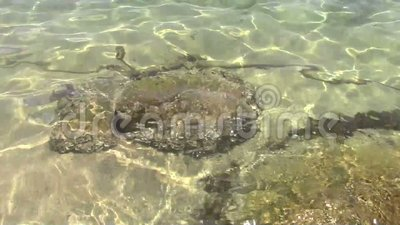 Rock under the sea. Closeup of a rock on under sea at shore stock video