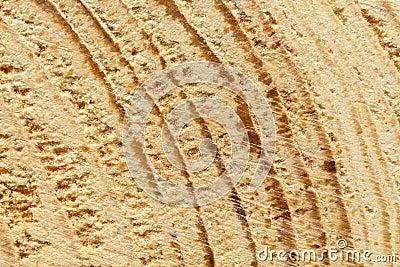 Closeup of rough-hewn pine tree texture