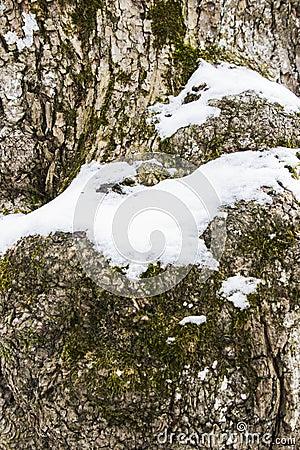 Free Closeup Rough Tree Bark Texture Stock Photo - 112681920