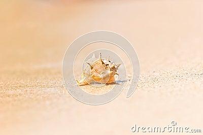 Closeup of a sea shell