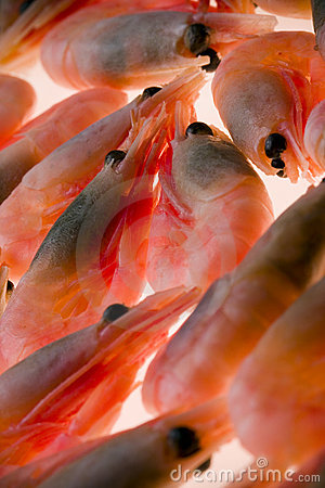 Closeup of shrimp