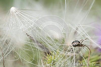 Closeup of a spider