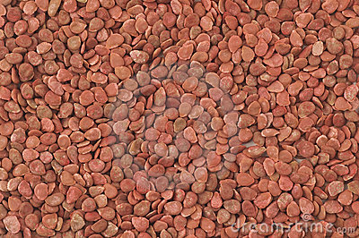 Closeup of tomato seed
