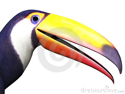 Closeup of toucan bird