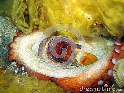 Closeup view of Octopus