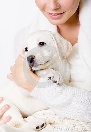Closeup of white puppy on the hands of woman